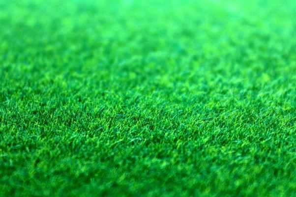 field grass green ground