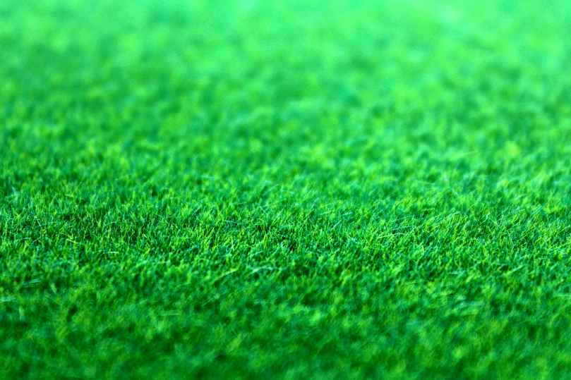 field grass green ground